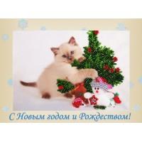 "Открытка ""Котенок"""